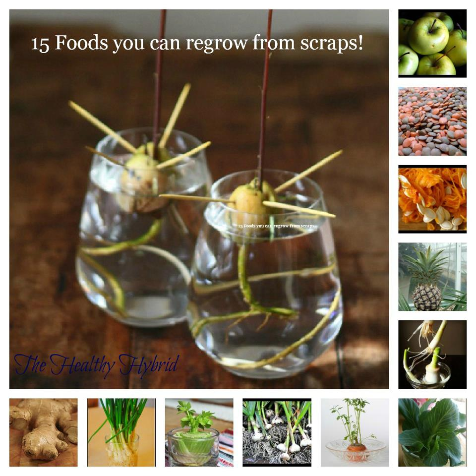 15 Foods You Can Grow From Scraps.