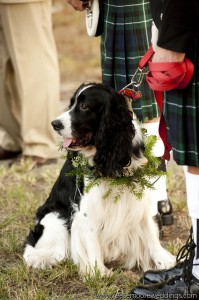Spaniel Dog ring Bearer Collar